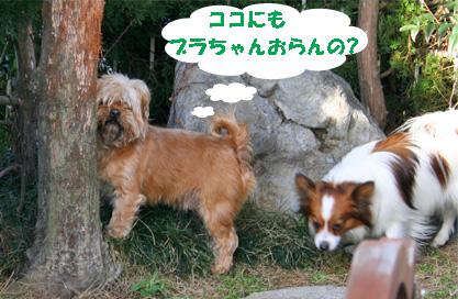 gajirou080207-7.jpg