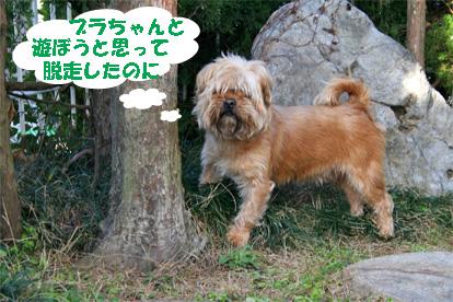 gajirou080207-8.jpg