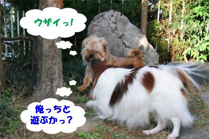 gajirou080207-9.jpg