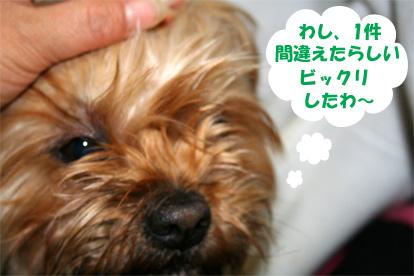 gajirou080210-1.jpg