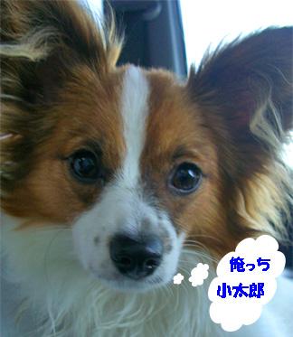 gasshu3..jpg