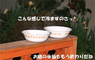 gohan080206-1.jpg