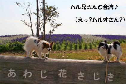 hanasajiki081102-1.jpg