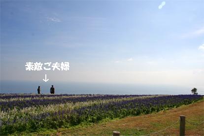hanasajiki081102-2.jpg