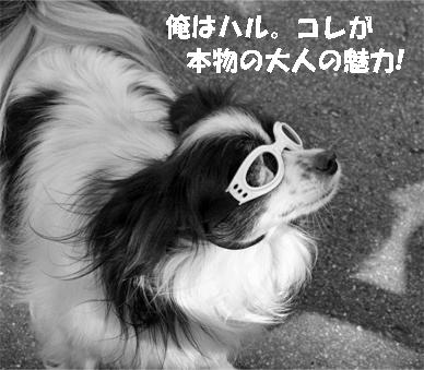 haru071024-1.jpg