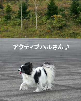 haruchan071023-1.jpg
