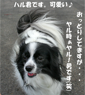 haruchan071023-2.jpg