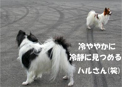 haruchan071023-3.jpg