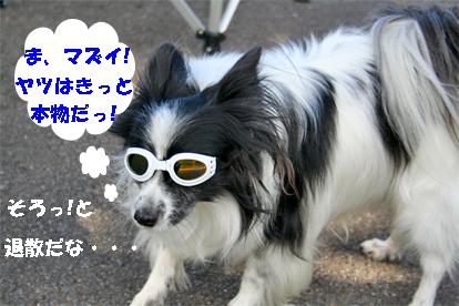 haruchan071026-1.jpg
