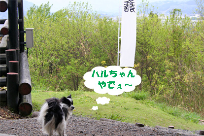 haruchan080502-1.jpg
