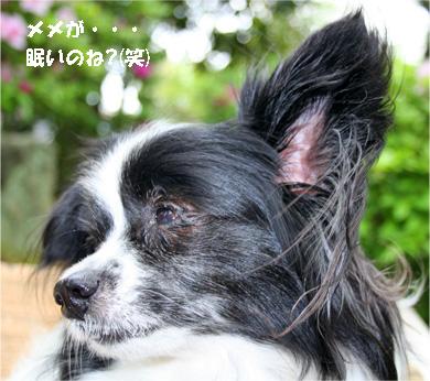 haruchan080503-2.jpg