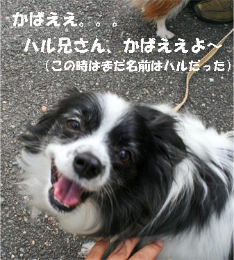 haruchan081102-1.jpg