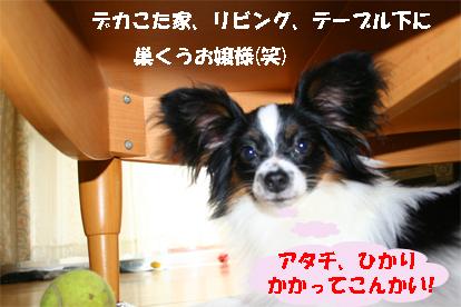 hikari070918-1.jpg