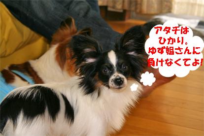 hikari070918-2.jpg
