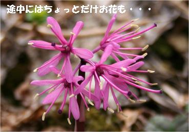 ibukiyama080429-1.jpg
