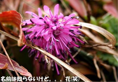 ibukiyama080429-5.jpg