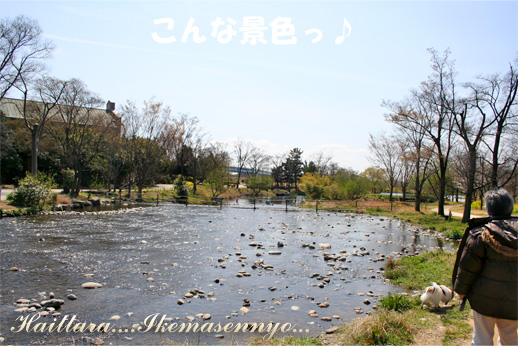 kawasima2.jpg
