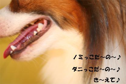 kota070925-3.jpg