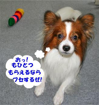 kota080926-2.jpg