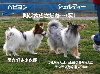 kotamaru070312-1.jpg
