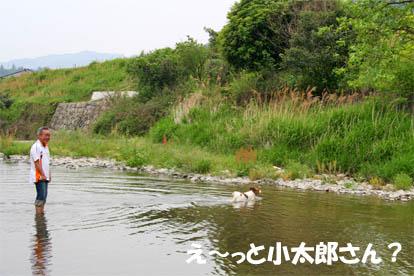 kotapapa1.jpg