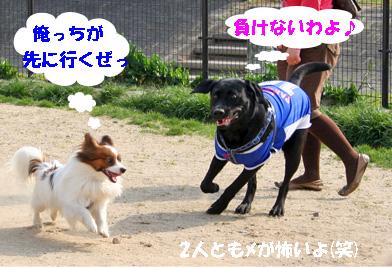 kotarabu080408-2.jpg