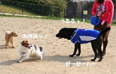 kotarabu080409-1.jpg