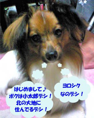 kotaroukun1.jpg