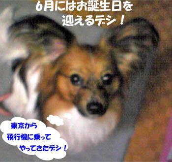 kotaroukun2.jpg