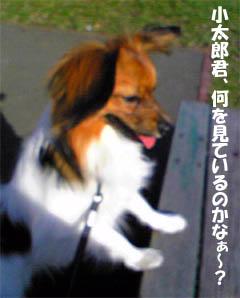 kotaroukun4.jpg