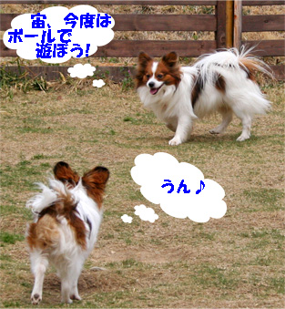 kotasora080331-3.jpg