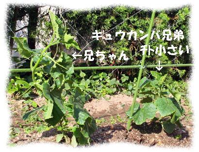 kyuuri070518-11.jpg