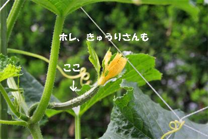 kyuuri070529-1.jpg