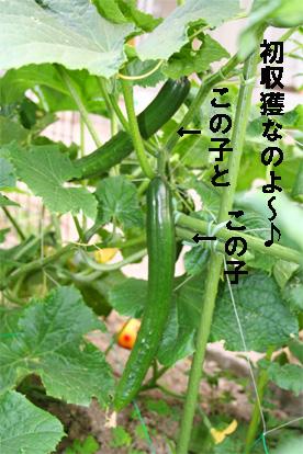 kyuuri070605-1.jpg