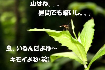 meihou070725-4.jpg