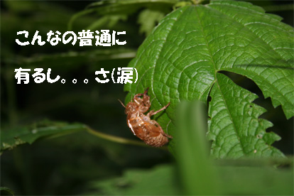 meihou070725-5.jpg