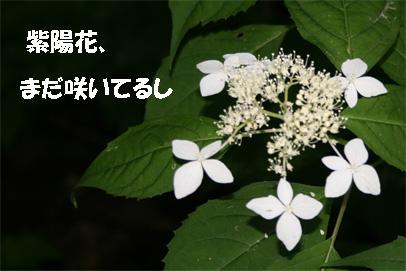 meihou070725-6.jpg