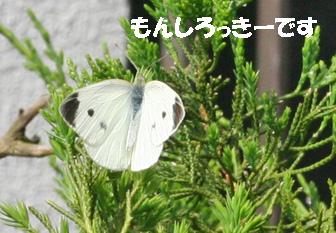 monchan080606-1.jpg