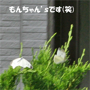 monchan080606-2.jpg