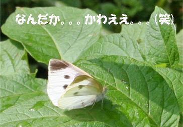 monchan080606-3.jpg