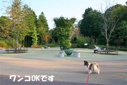 morikoro081018-3.jpg
