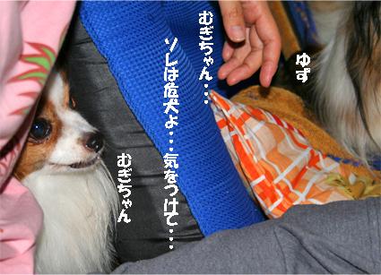 mugicha070818-5.jpg