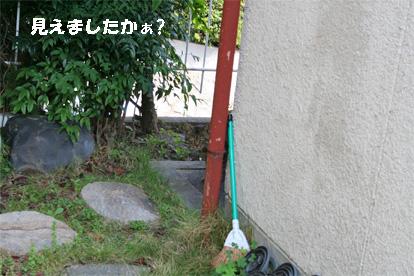 niwa080527-1.jpg