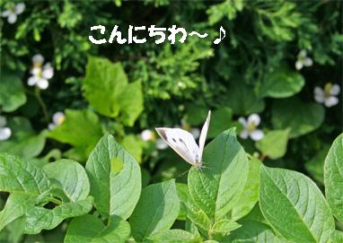 niwa080606-1.jpg