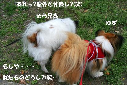 sorachanntoyuzu080503-1.jpg