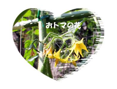 tomato070518-21.jpg