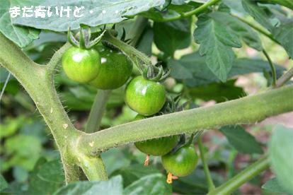 tomato070529-1.jpg