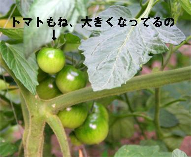 tomato070605-1.jpg