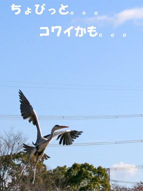 tori071212-4.jpg