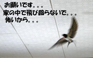 tsubame4.jpg